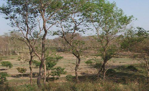 বাবুডাইং