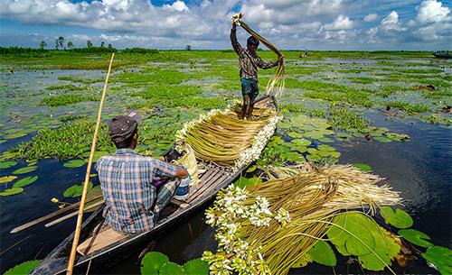 আড়িয়াল বিল মুন্সিগঞ্জ জেলার দর্শনীয় স্থান